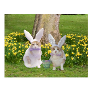 Cute, Funny Bunny Cats Postcard