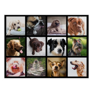 Cute & Funny Dogs Photo Collage Poster 1