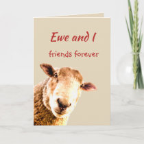 Cute Funny Friends Forever Sheep Animal Humor Thank You Card