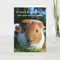 Cute Funny Guinea Pig Birthday Card