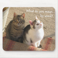 Cute Funny Kittens - Mouse Pad