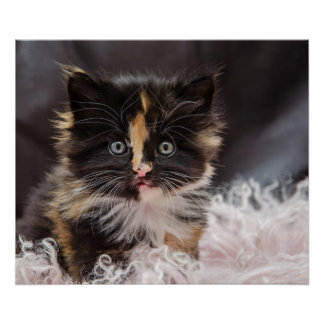 Cute Funny Lovely Fluffy Kitty Baby Cat Pet Poster
