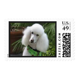 Cute Funny Poodle Postage Stamp