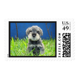 Cute Funny Schnauzer Postage Stamp