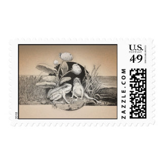 cute funny two little frogs postage stamps