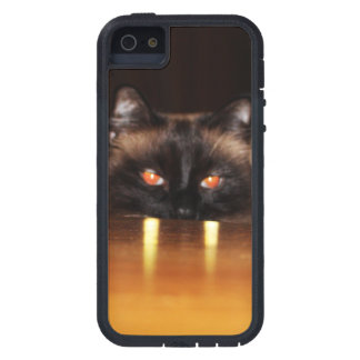 Cute, funny, vampire cat case for iPhone SE/5/5s