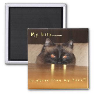 Cute, funny, vampire cat magnet