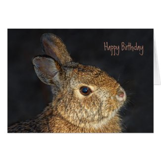 Cute Furry Bunny Rabbit in Sunlight Cards