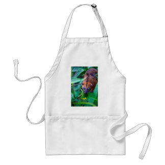 Cute furry cuscus possum looking at camera adult apron