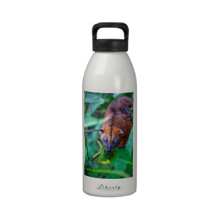 Cute furry cuscus possum looking at camera water bottle
