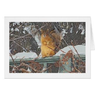 """""""CUTE FURRY SQUIRREL ON SNOWY FENCE""""/ DIG.MANIP. CARD"""