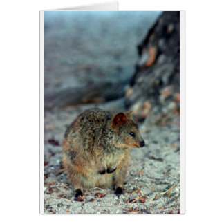 Cute fury Quokka on Rottnest Island Greeting Card