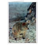 Cute fury Quokka on Rottnest Island Cards