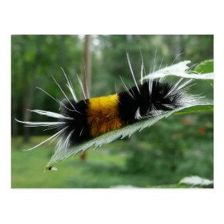 Cute Fuzzy Caterpillar Postcard