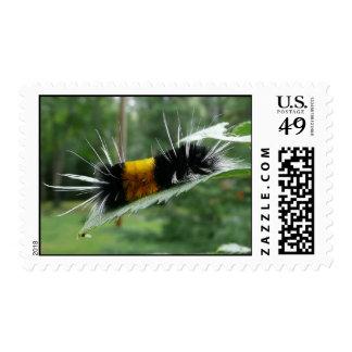 Cute Fuzzy Caterpillar Stamps