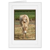 Cute Fuzzy Donkey Foal Cards