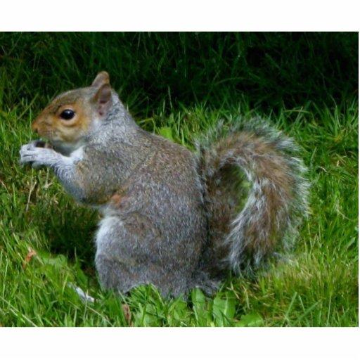 Cute fuzzy squirrel photo sculpture