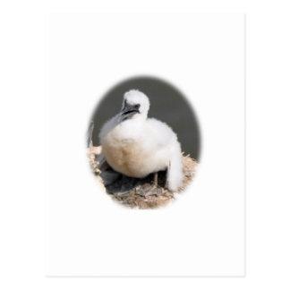 Cute Gannet Chick Postcard