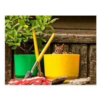 Cute Gardening Chipmunk Postcard