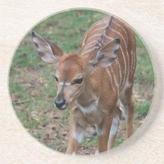 Cute Gazelle Drink Coaster