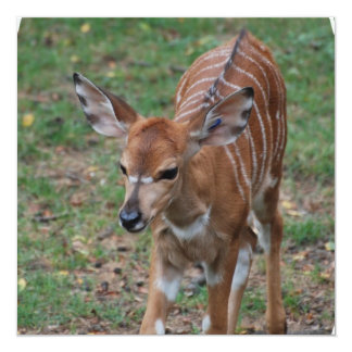 Cute Gazelle Custom Announcements