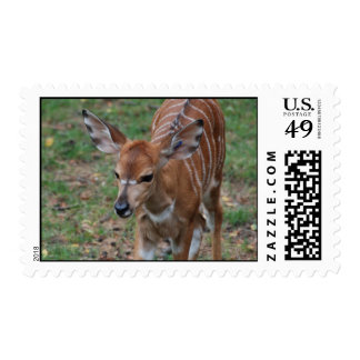 Cute Gazelle Postage Stamp