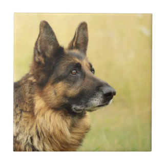 Cute German Shepherd Tile
