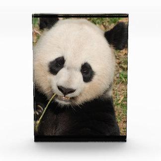 Cute Giant Panda Bear Acrylic Award