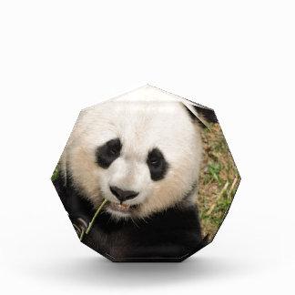 Cute Giant Panda Bear Award