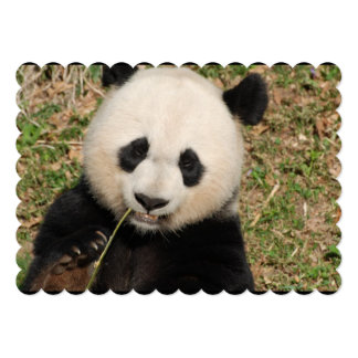 Cute Giant Panda Bear Card