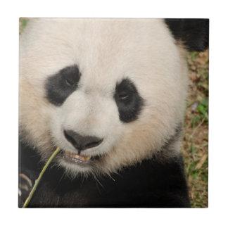 Cute Giant Panda Bear Ceramic Tile