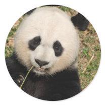 Cute Giant Panda Bear Classic Round Sticker