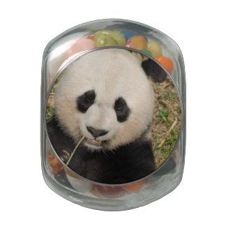 Cute Giant Panda Bear Glass Jar
