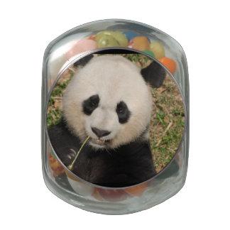Cute Giant Panda Bear Glass Jars
