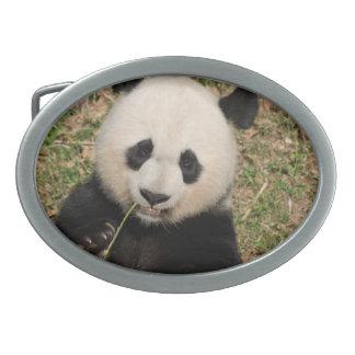 Cute Giant Panda Bear Oval Belt Buckle