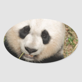 Cute Giant Panda Bear Oval Sticker