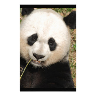Cute Giant Panda Bear Stationery