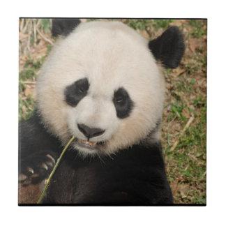 Cute Giant Panda Bear Tile
