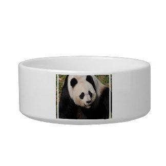 Cute Giant Panda Cat Bowls