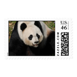 Cute Giant Panda Postage Stamp