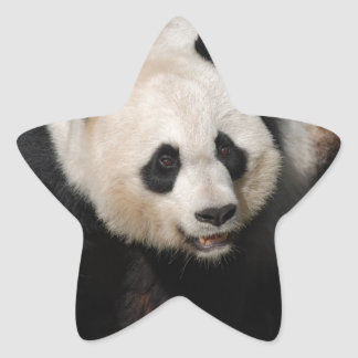 Cute Giant Panda Stickers