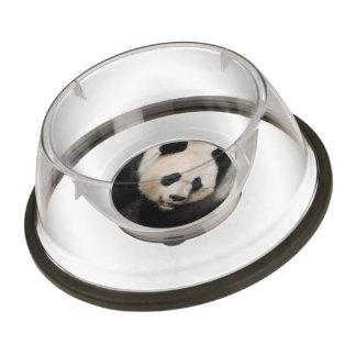 Cute Giant Panda Pet Bowl