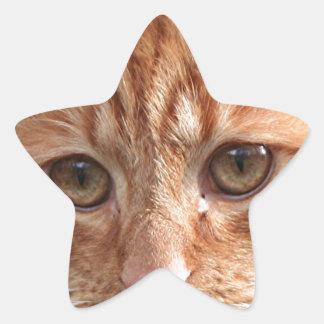 Cute ginger cat star sticker