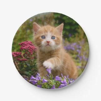 Cute ginger kitten in a garden paper plate