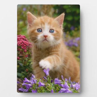 Cute ginger kitten in a garden plaque