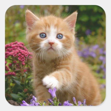 Cute ginger kitten in a garden square sticker