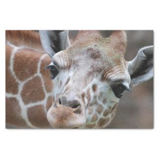 "Cute Giraffe 10"" X 15"" Tissue Paper"