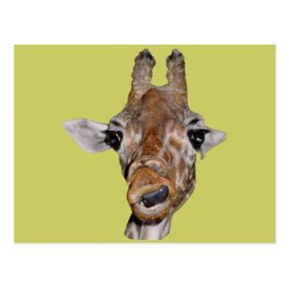 Cute Giraffe Gift Postcard