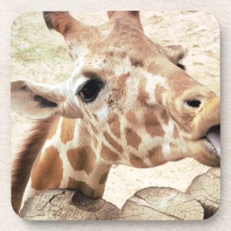Cute Giraffe Licking Coasters