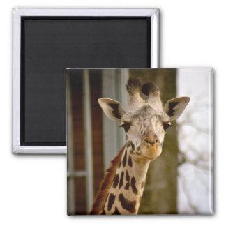 Cute Giraffe Photo Magnet